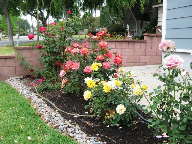 Rose Garden Ideas For Front Yard