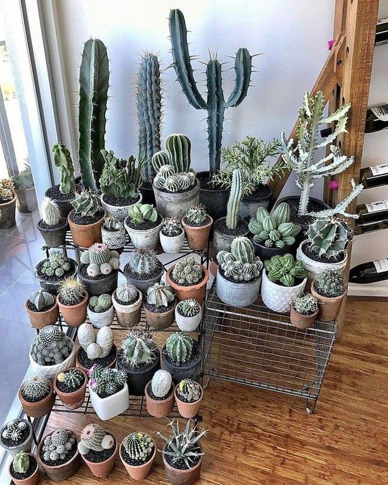 Indoor Cactus Garden Ideas