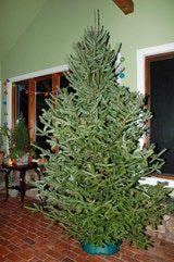 Sugar Water For Christmas Tree