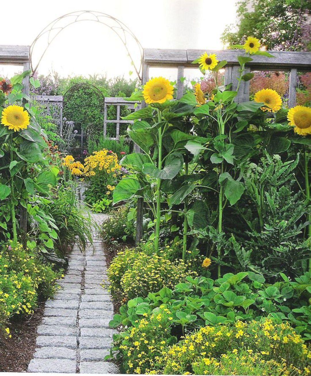 Sunflower Garden Ideas Design