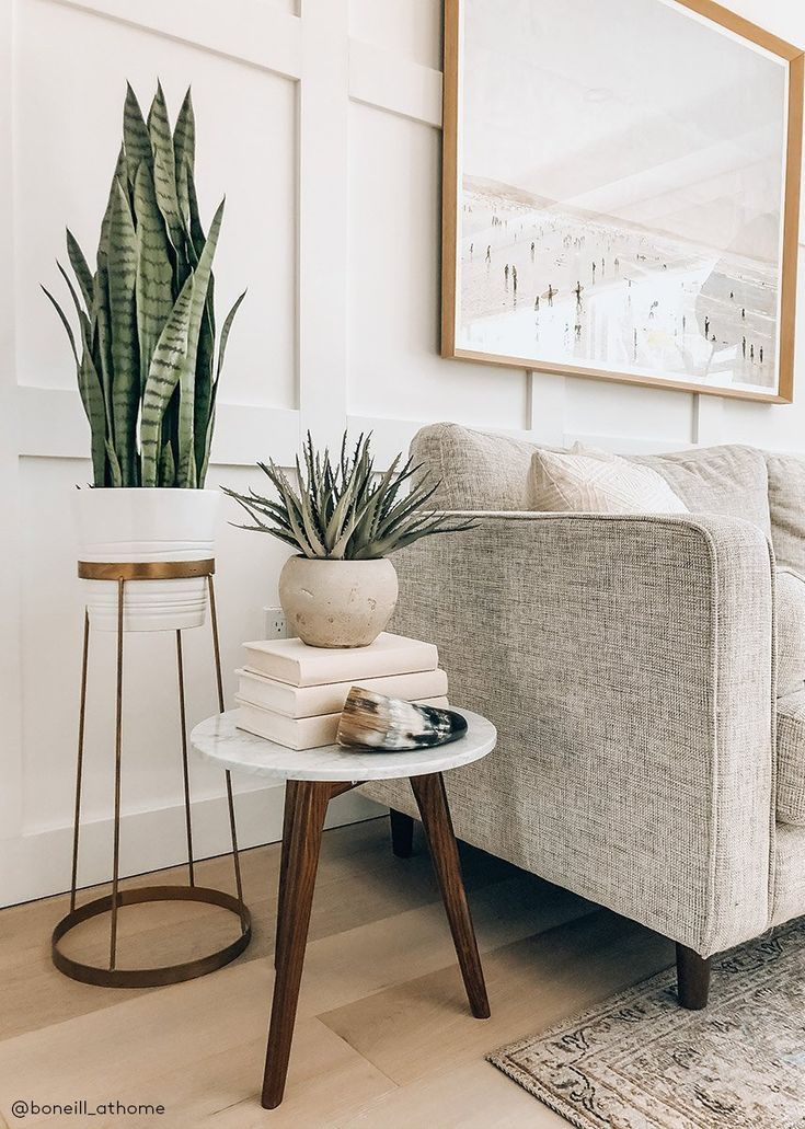 Plant Decoration In Living Room