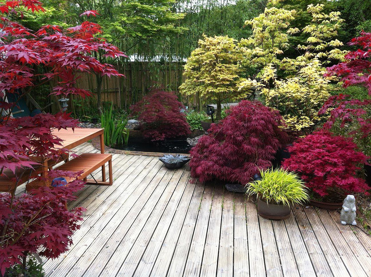 Japanese Maple Garden Ideas